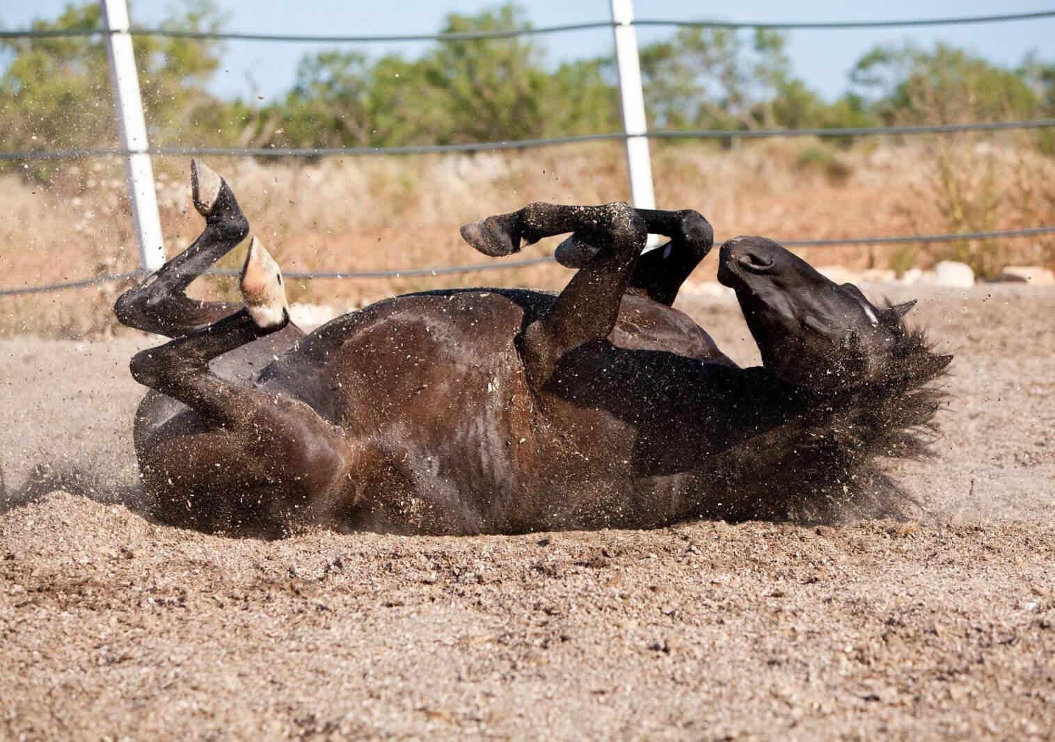 Abdome agudo em equinos