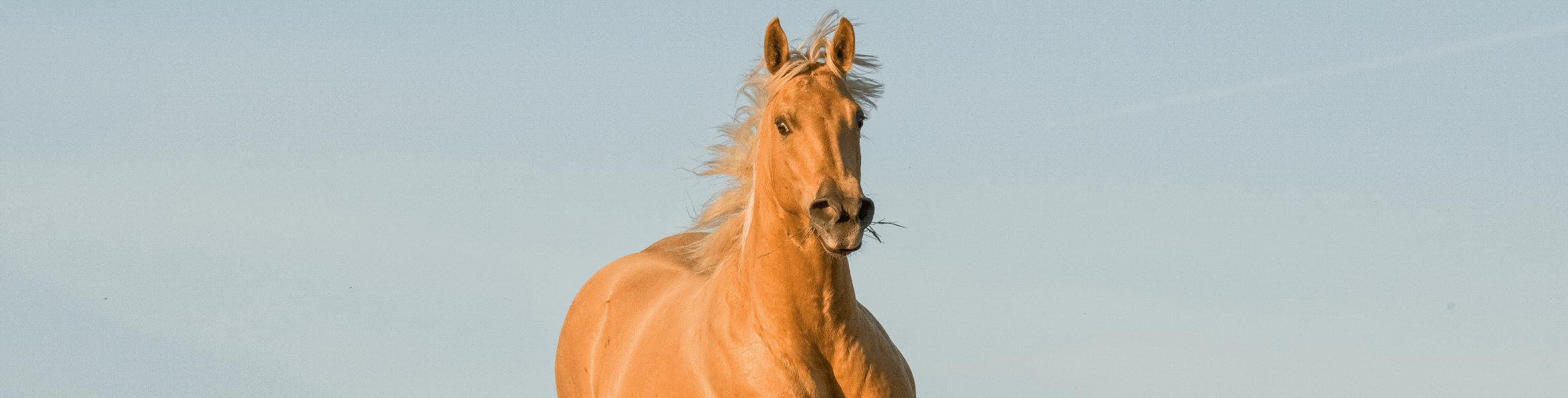 Controle da dor em equinos: O que é e as formas de tratamento.