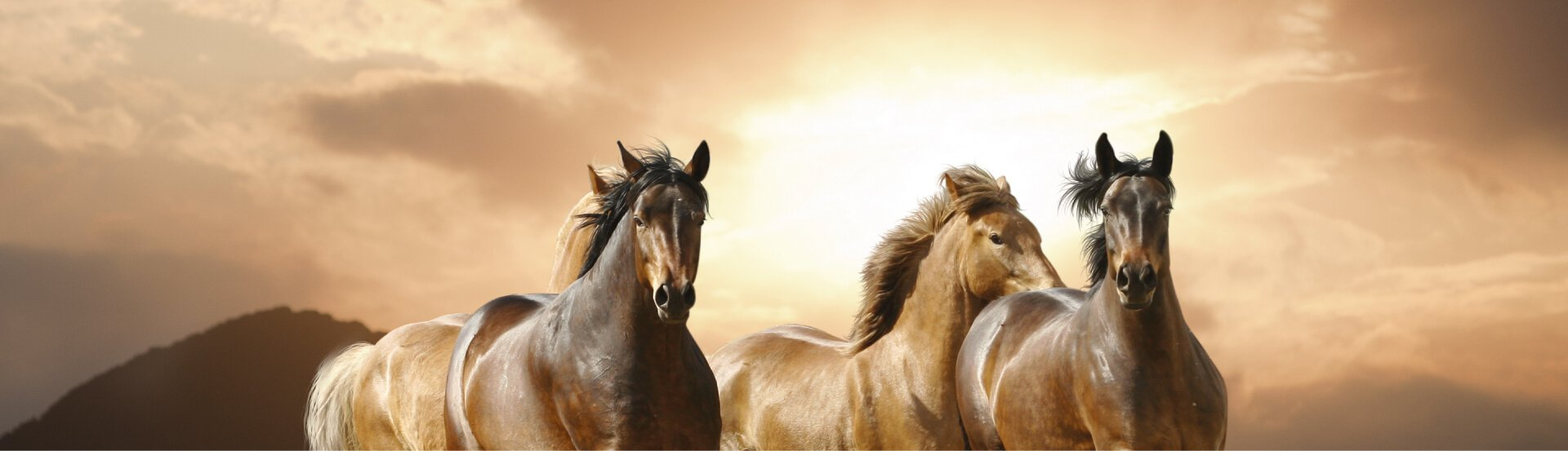 Verminoses em equinos